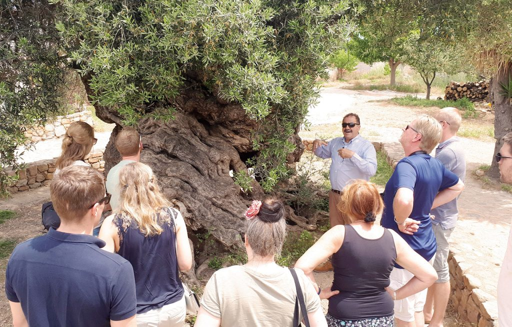 Wine and olive oil Tasting in Crete - oldest olive tree