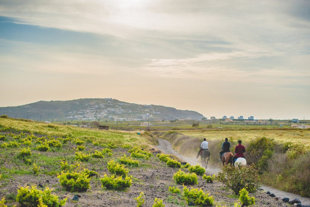 Santorini Horse Riding at Eros Beach